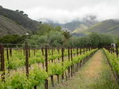 Abc_vineyard_10001