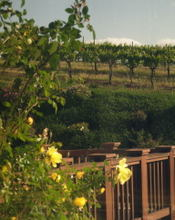 Cambria_vineyards50001