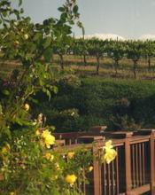 Cambria_vineyards50001